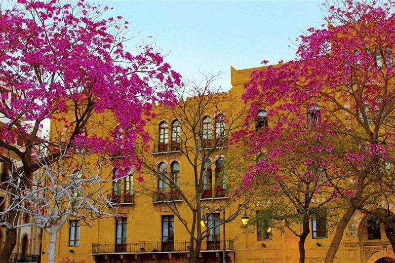 picoftheday lebanon beirut mybeirut downtown purple trees nature...